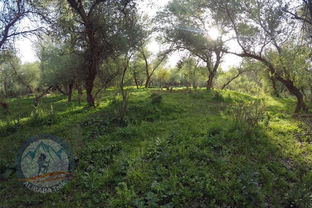 The amazing small Island in Karun River