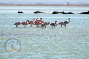 Alibabatrek Iran Travel visit iran tour packages Travel to Arak sightseeing Trip to Arak city tour tourism Arak tourist attraction arak tour visit arak tour arak Lorestan travel Meighan wetland