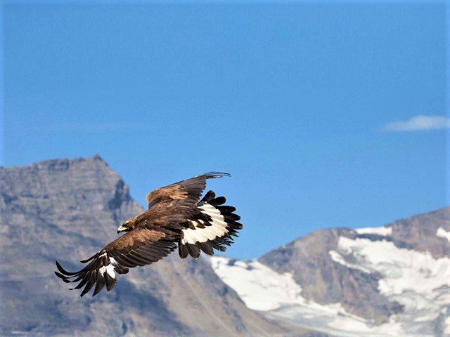 Damavand alibabatrek Damavand flora and fauna-Iran Wild Life - Babak Aliabadi- Damvand birds- Eagles - Falcon - persian goat-Iran blog