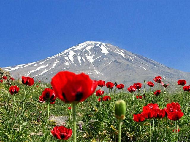 Damavand alibabatrek Damavand flora and fauna-Iran Wild Life - persian Shaghayegh Lar -Iran blog