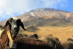 Damavand flora and fauna