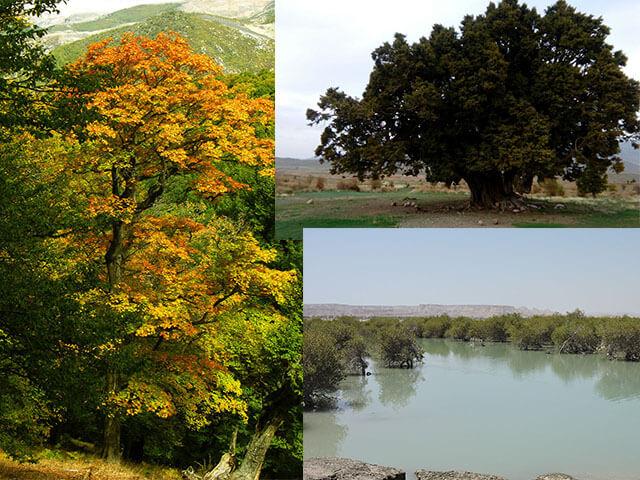 alibabatrek Damavand flora and fauna-Iran Wild Life-Iran blog