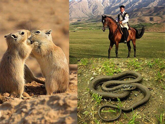 alibabatrek Damavand flora and fauna-Iran Wild Life - persian horse-Iran blog