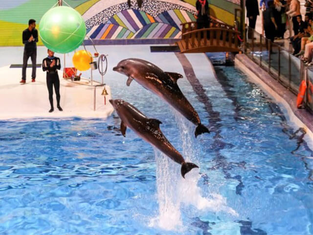 Milad Tower Dolphinarium - Iran-Tehran -Alibabatrek-Visit Iran-Traveling Iran With Children Iran is safe-travel iran with kids - travel Iran