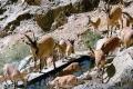 Palang Darreh Protected Area