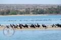 Nayband Marine National Park